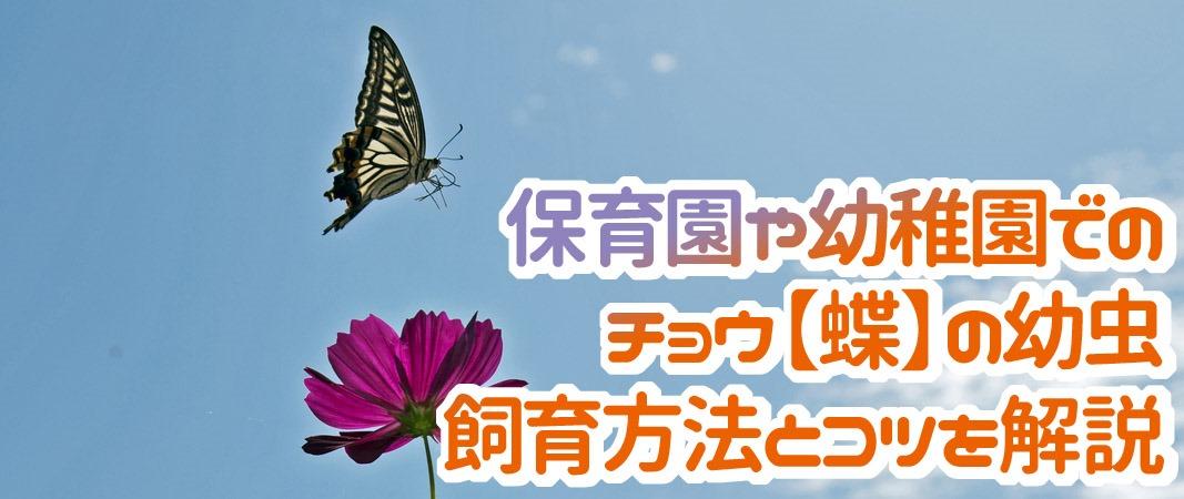 保育園でのチョウの幼虫の飼育方法を解説