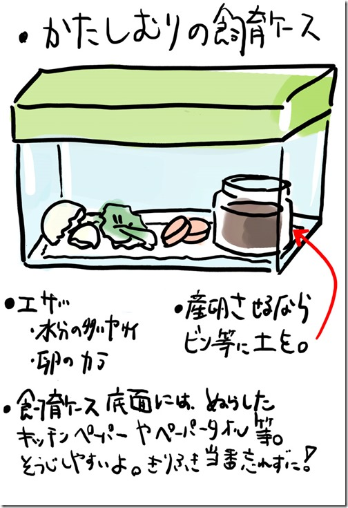 カタツムリの飼育ケースの環境と注意点