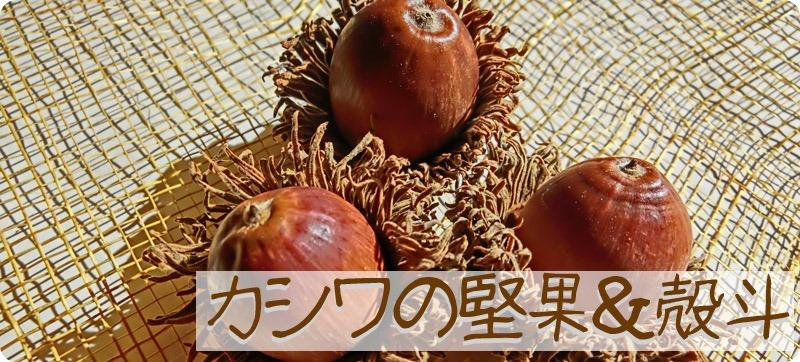 カシワのどんぐりの堅果と殻斗