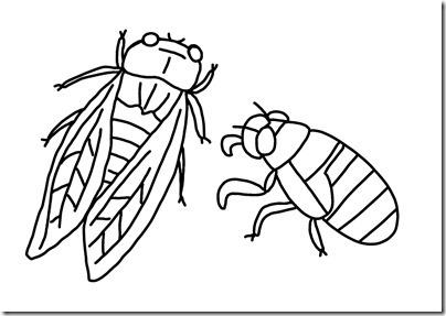 せみ、せみの幼虫