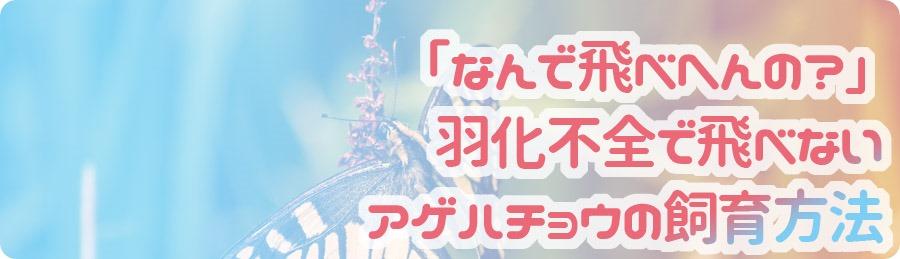 ageha-ukahuzen
